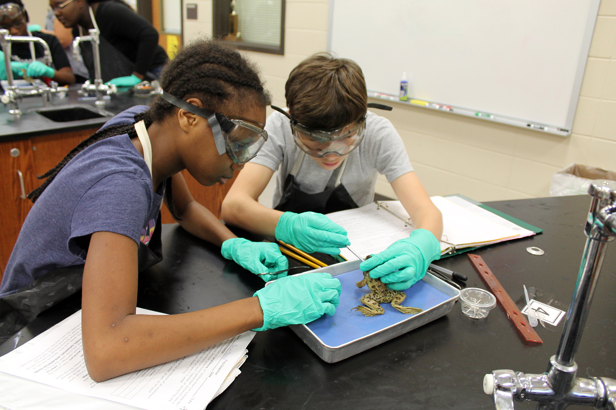 dissecting frogs